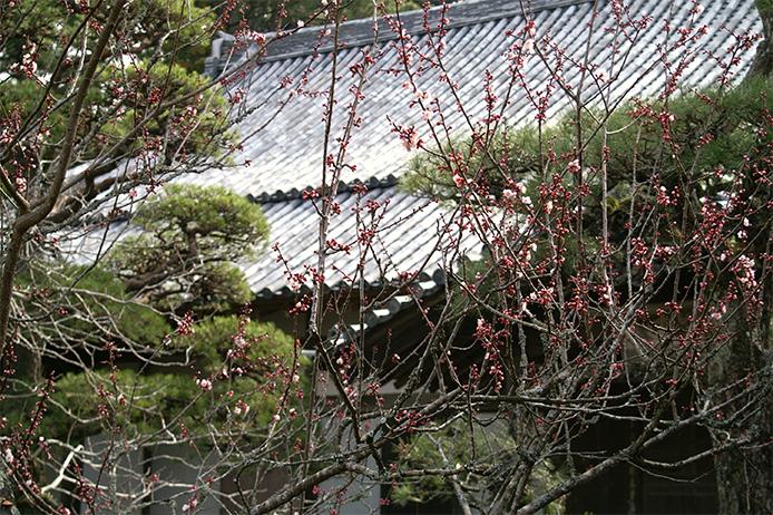 東光寺の花と樹木