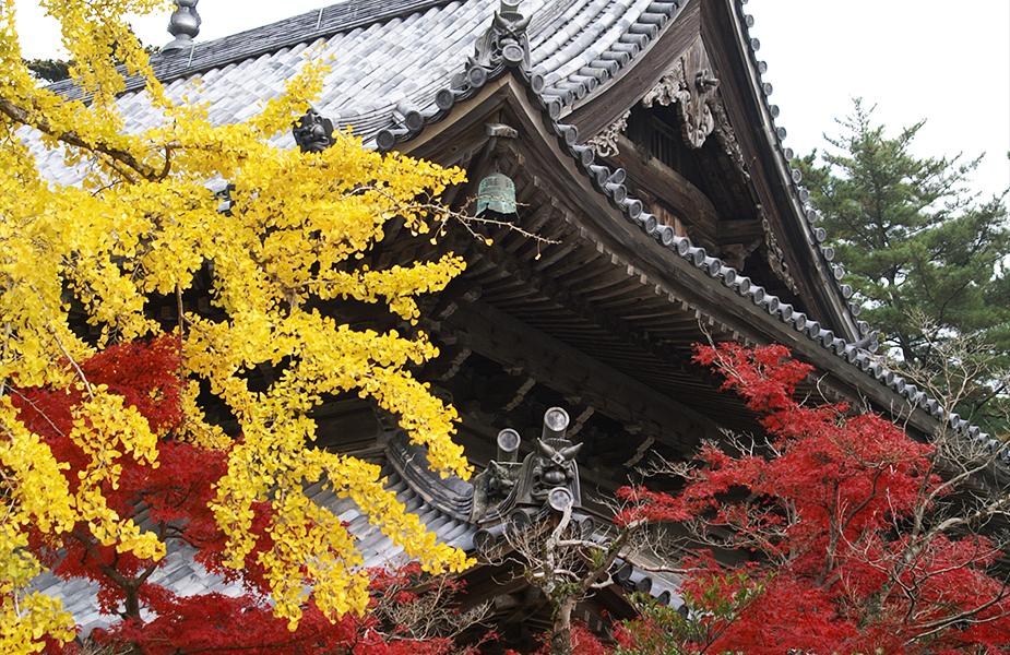 呼吸する寺院