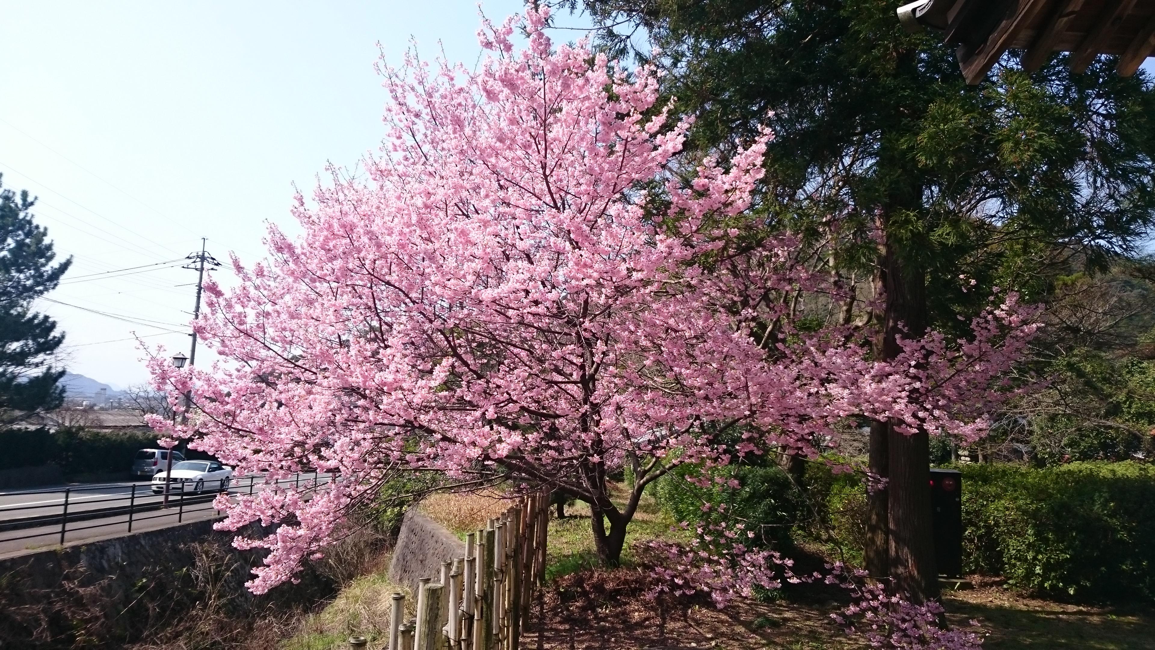 2016春
