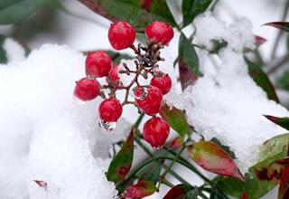 雪景色写真集