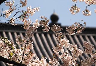 春景色写真集