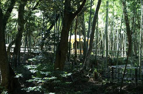 竹林公園完成